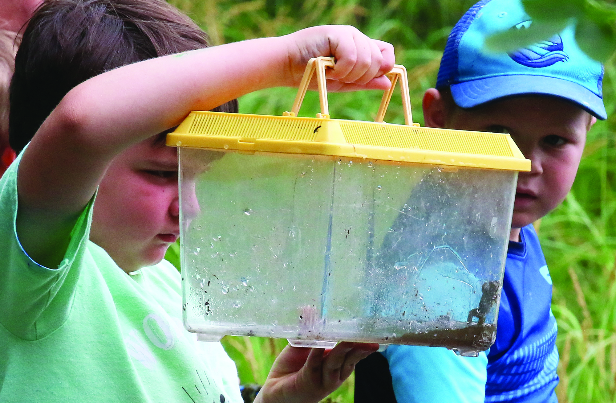 Matthew Briggs holds a container of frogs as Jeremiah Hodges looks on. The four boys at the camp learned about the life cycle of frogs and other aquatic creatures as they explored a swampy area of the Navarino Nature Center.Carol Ryczek | NEW Media