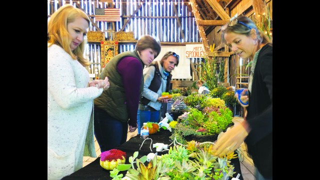 Owner Karen Schairer, right, demonstrates to guests how to create their own take-home pumpkin decorations with a variety of succulents. Guests enjoying a girls night out are, from left, Nicole Melander, Wausau, Megan Olson, Birnamwood, and Cori Soukup, Hatley. The Thursday night event, Sips & Succulents, will take place through Oct. 8 at Schairer's Autumn Acres in Birnamwood. Miriam Nelson | NEW Media