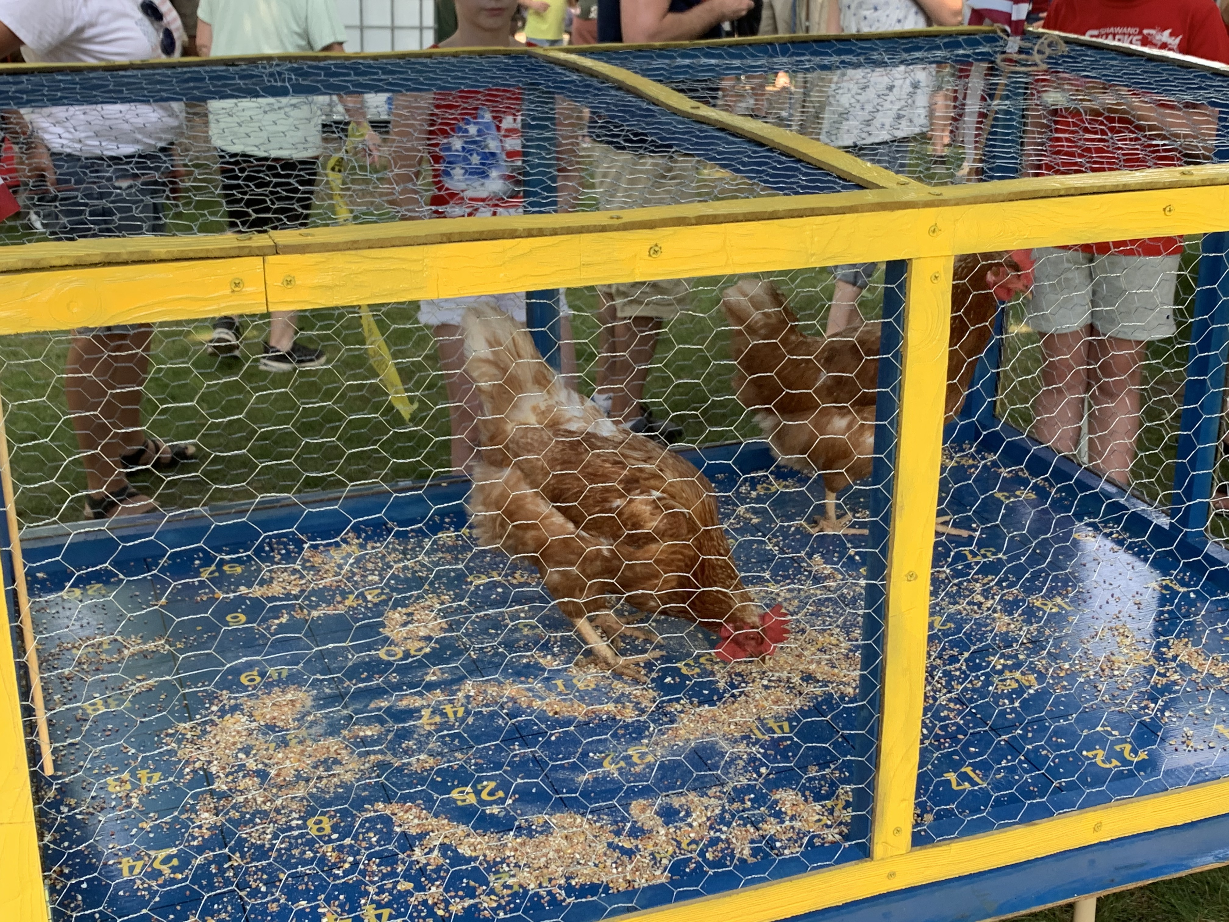 Chicken poop bingo was a popular attraction for visitors as chickens were fed in anticipation of what number the droppings would land on, in Village Park in Bonduel on July 4.Luke Reimer | NEW Media