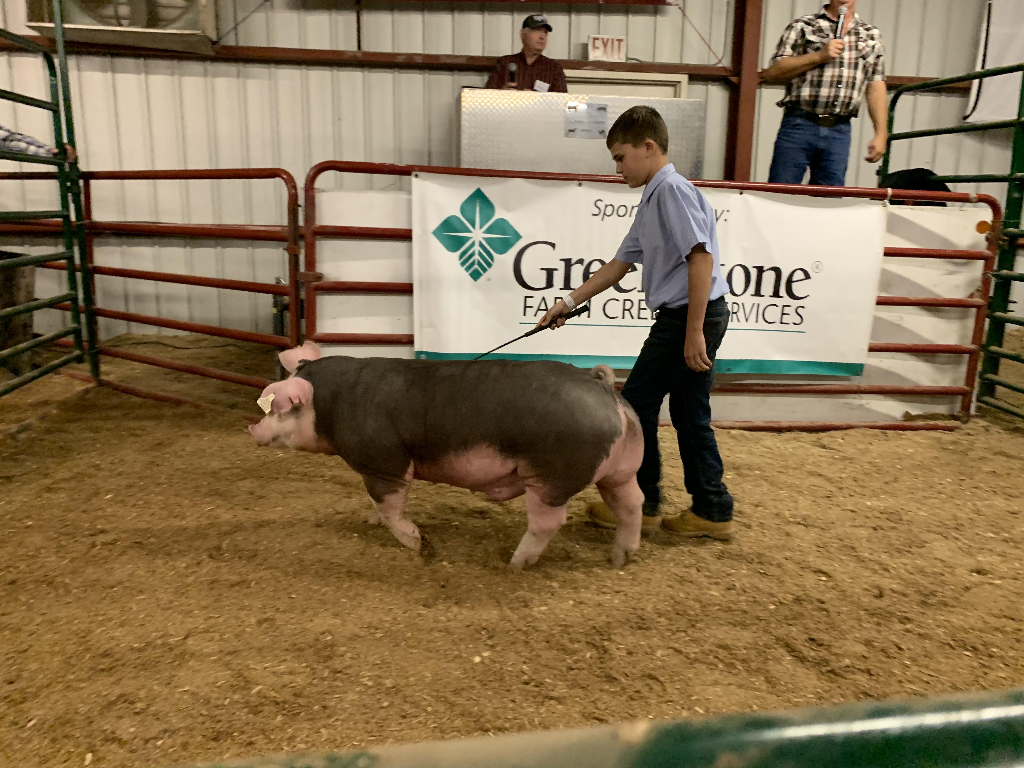 Gresham FFA member Charlie Huffman walks his hog around the ring as visitors bid on it during the livestock auction at the Shawano County Fair on Sept. 3.Luke Reimer | NEW Media