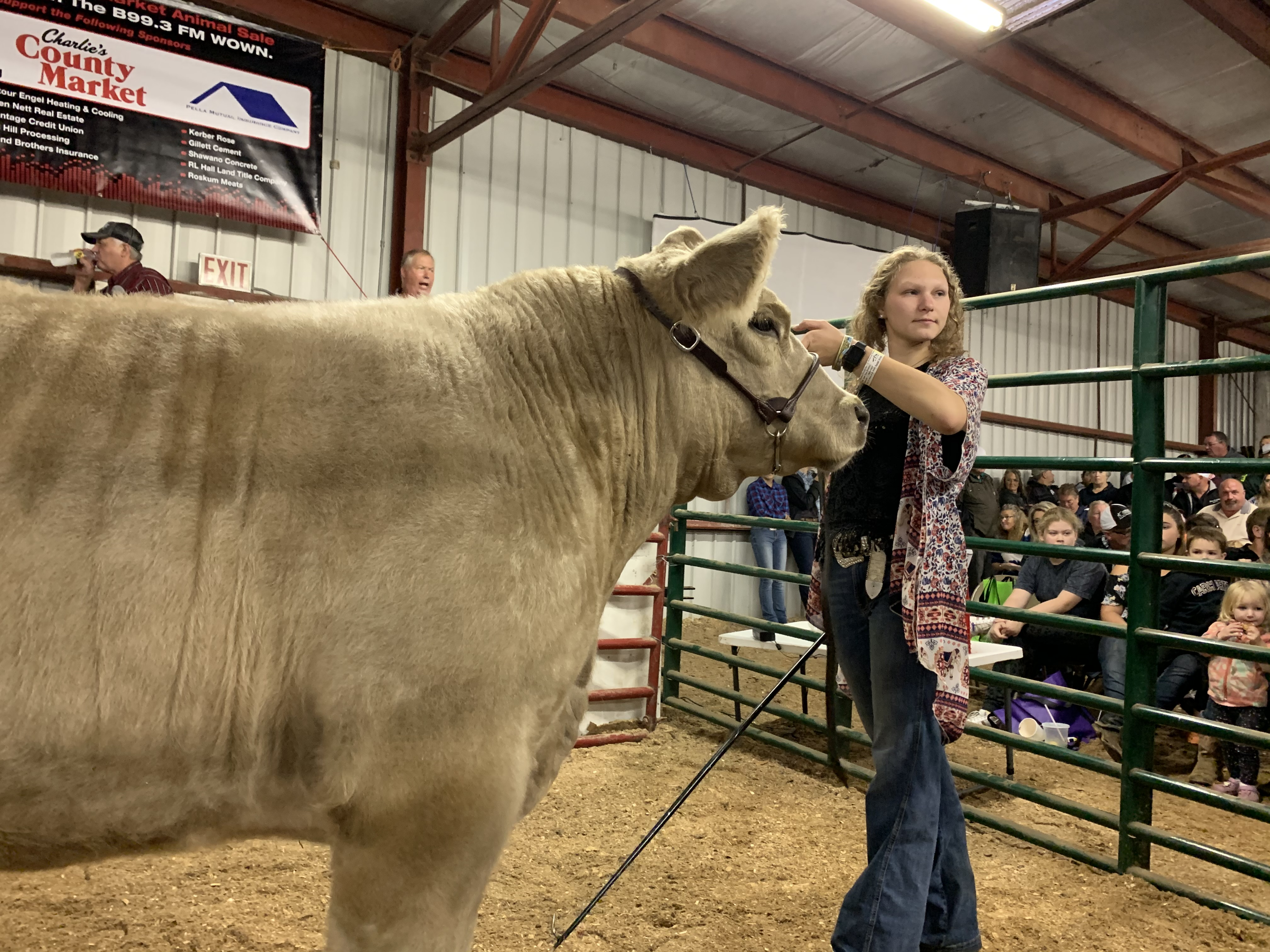 Landstad 4-H member Kendall Wilcox shows off her cow during the live stock auction at the Shawano County Fair on Sept. 3.(Luke Reimer   NEW Media)
