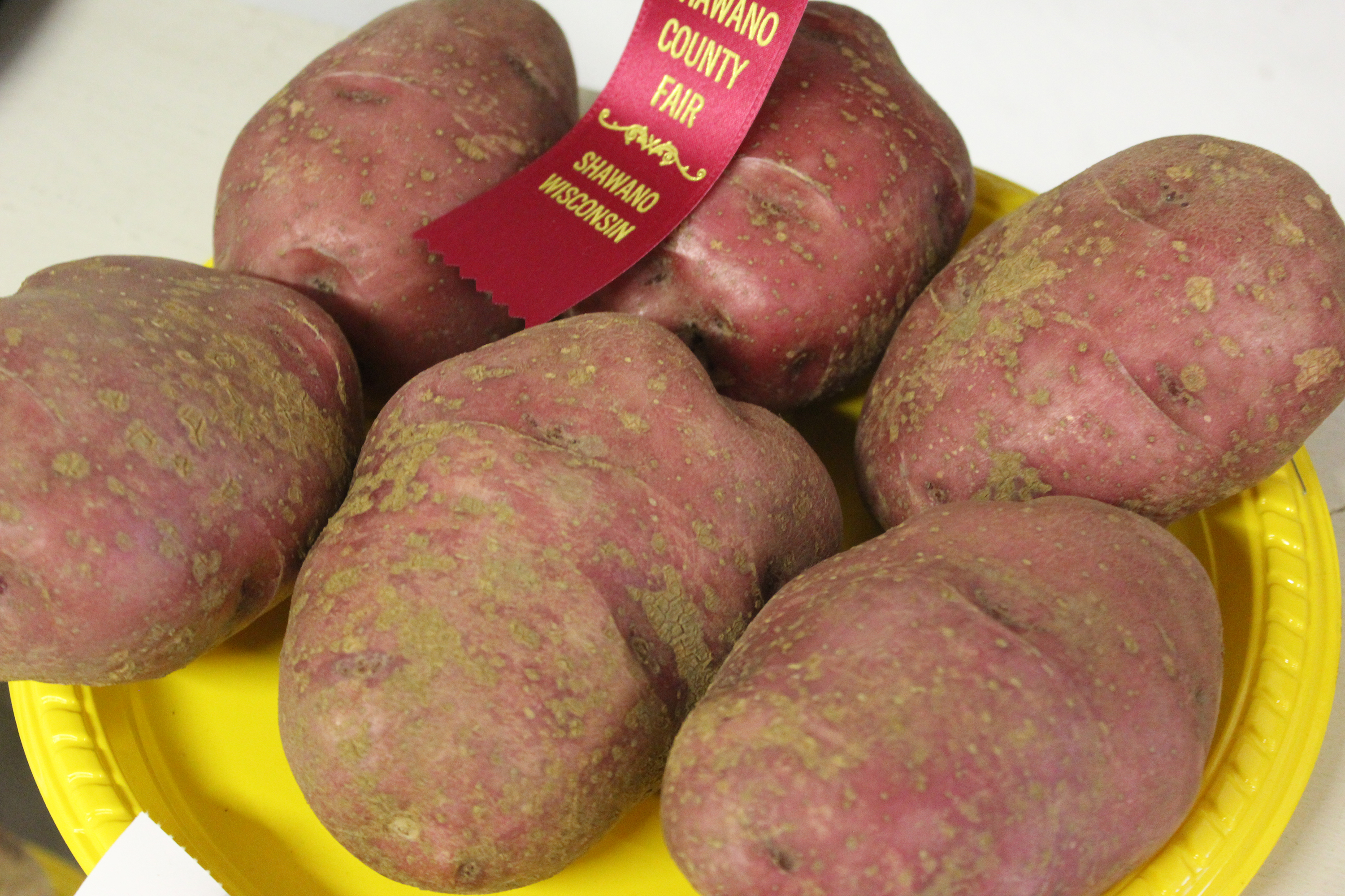 A half-dozen red potatoes sit on a plate displayed for all to see at the Shawano County Fair.<br />(Lee Pulaski   NEW Media)